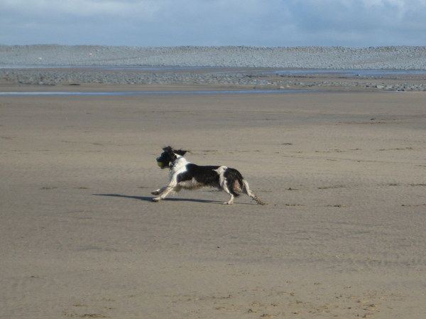 Westward Ho is our local Dog Friendly Beach in North Devon